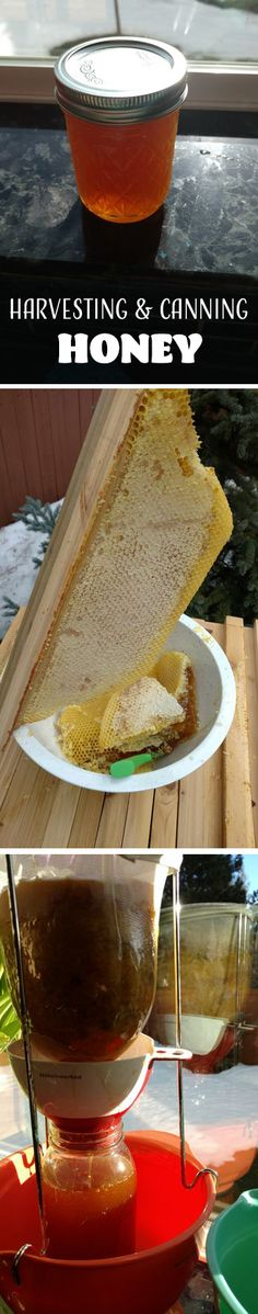 How to Harvest and Can Honey: the Crush and Strain Method