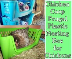 Chicken Coop Frugal Plastic Nesting Box for Chickens Homesteading  - The Homestead Survival .Com