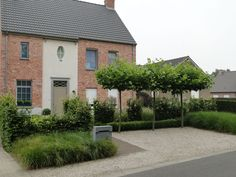 beautiful Belgian garden with soft, pale gravel/hard landscaping, small rounded trees, clipped hedges and topiary and grasses - Thomas Leplat