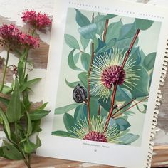 Vintage book print of an original botanical watercolour painting by English/Australian artist Edgar Dell. by WilderAndWren on Etsy https://www.etsy.com/uk/listing/468173236/vintage-book-print-of-an-original