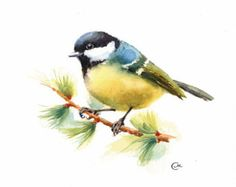 Robin – Limited edition giclee print from original pastel drawing by Imogen Man Birds Painting, Watercolor Animals, Drawings, Watercolor Paintings, Painting, Watercolor Bird, Bird Illustration, Original Watercolors, Bird Art