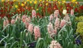 How to Buy the Best Plants. The pick of the litter has full, healthy growth above & below the soil. by Jason Powell found on finegardening.com