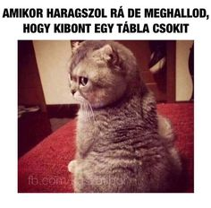 Ugye azért én is kapok? Animals And Pets, Funny Animals, Cute Animals, Cat Fails, Comedy Memes, Everything Funny, Silly Cats, Me Too Meme, Marvel
