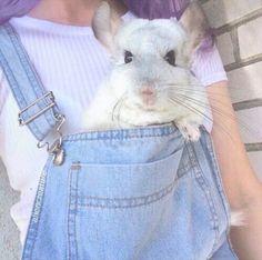 animal, tumblr, and grunge image