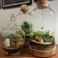 5 Plant Creations in The House Without Using Soil - indoorjungle - Gardening wedding Terrarium succulentes Terrarium Diy, Glass Terrarium, Terrarium Wedding, Hanging Terrarium, Indoor Garden, Indoor Plants, Deco Nature, Decoration Plante, Tower Garden