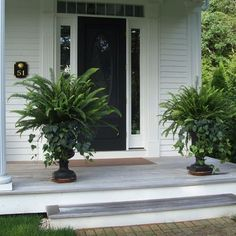 45 Totally Inspiring Summer Porch Decor Ideas fern and trailing vine planters to frame front porch e Summer Front Porches, Summer Porch Decor, Container Plants, Container Gardening, Succulent Containers, Container Flowers, Vegetable Gardening, Potted Ferns, Urn Planters