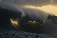 Golden Curl by Ray Collins
