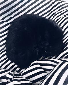 Just a little ball of fur  #tasaraita #marimekko #crazycatlady #home