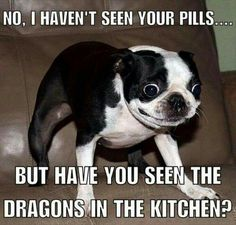 No, I haven't seen your pills... But have you seen the dragons in the kitchen?!!      (Post by SLP 6/1/16 to pm between SLP, MTE, & MEE & to her page 12/31/16.)