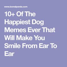 10+ Of The Happiest Dog Memes Ever That Will Make You Smile From Ear To Ear