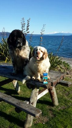 Newflands Hoki Oil has the most incredible start in New Zealand find out more www.newflands.com