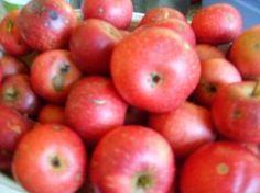 Apfelmus, Apfeltaschen, Apfelringe selber machen