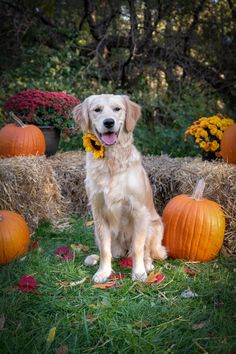 Things that make you go AWW! Like puppies, bunnies, babies, and so on. A place for really cute pictures and videos! Fall Pics, Fall Pictures, Dog Pictures, Animal Pictures, Cute Pictures, Photography Hacks, Animal Photography, Country Fall, Golden Retrievers