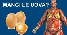 Ricerche rivelano: cosa succede al tuo corpo se mangi due uova al giorno. Newsner Ti diamo le notize che sono importanti per te!