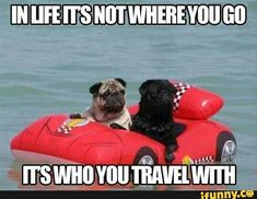 16 Best Travel Meme images | Travel meme, Travel, Bones funny