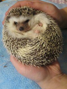 Cute Hedgehogs In One Gallery