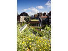 wild flower green roof - The Muse - Stoke Newington, Islington, London - bere:architects
