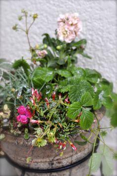 red, pink, cutie arrangement