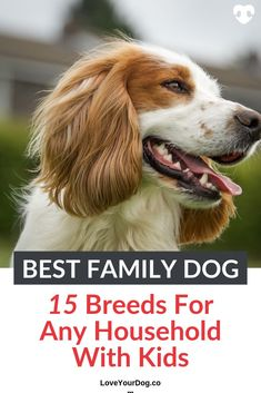 Adopting a dog or puppy into your family is a big step, so you want to be sure you pick the right breed before you take the plunge. Get some sound advice on choosing a breed of dog that will make a great family pet! #LoveYourDog #BestFamilyDogs #BestFamilyDogBreed #FamilyDogs #BestDogsWithKids #KidsWithDogs