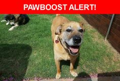 Please spread the word! Twix was last seen in Oklahoma City, OK 73116.  Description: Male, large, light brown short coat, mutt, neutered, blue collar, friendly, around 13 years old, limp in front and back leg   Nearest Address: 3000 NW 71st St, Oklahoma City, OK, United States