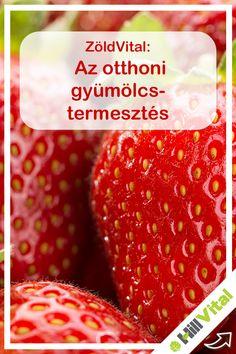 Strawberry, Keto, Gardening, Fruit, Blog, Garten, Strawberry Fruit, Lawn And Garden, Strawberries