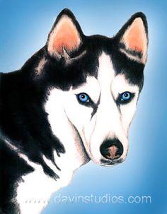 Siberian Husky dog art print of original pastel by davinstudios