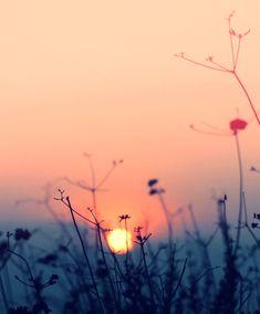 せっかくならお花を長持ちさせたい。 そのためにはちゃんと毎日...|MERY [メリー]