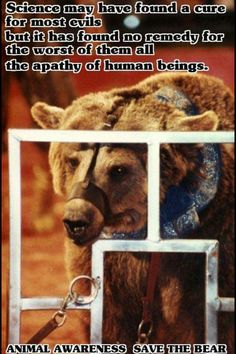 Bears are a magnificent creature, they are powerful, majestic, and strong. The circus takes that out of them, yet they are still scared so they have the bears mouths closed. Stop Animal Cruelty, Animal Testing, Animal Rescue, Cane Corso, Sphynx, Chinchilla, Wild Life, Otter, Rottweiler