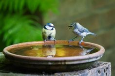 How to Get Birds to Use a Bird Bath - Bird Feeder Hub Ken Wilber, Heated Bird Bath, How To Communicate Better, Moving Water, How To Attract Birds, Delphinium, How To Level Ground, Fun To Be One, Free Pictures