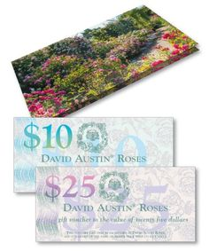 Gifts - Gift Experiences - David Austin Roses