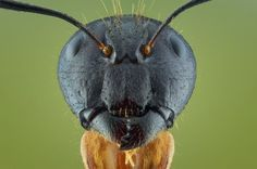 These Macro Pictures Of Bugs Are Actually Beautiful.