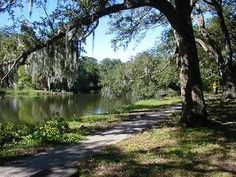 City Park, favorite place to walk in New Orleans-- #1 city I want to visit. Still on Mayfair witches mode.