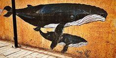 A aproximadamente a 360 km al norte de La Paz, en #BajaCaliforniaSur, los artistas urbanos de #Loreto han comenzado a utilizar algunas de las paredes de este #PuebloMagico para plasmar la impresionante fauna acuática que domina bajo las aguas del Mar de Cortés. #ArteUrbano #MexicoDesconocido
