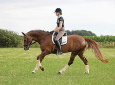 Positive Retraining for the Poorly Ridden Horse Awesome article