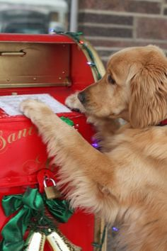 I Hope My Letter Gets To Santa In Time Golden Retriever Merry Christmas Card Puppy Holiday Dogs Santa Claus Dog Puppies Xmas