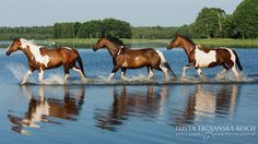 Cool Down by Edyta Trojańska-Koch Equine Photography Beautiful Horse Pictures, Beautiful Horses, Different Horse Breeds, Welsh Pony, All The Pretty Horses, Equine Photography, Horse Tack, Zebras, Beautiful Creatures