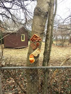 Apparently, There's An Online Community On Reddit That Spend Their Days Stapling Bread To Trees