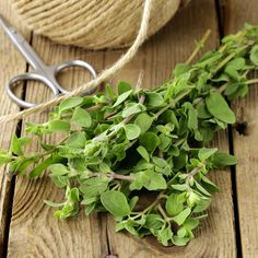 With casual care, marjoram will continue to grow through fall and winter, and into the following spring.data-pin-do=