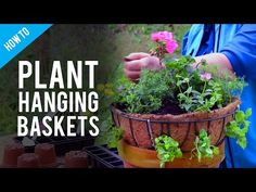 A Guide To Hanging Basket Plants & Flowers - YouTube