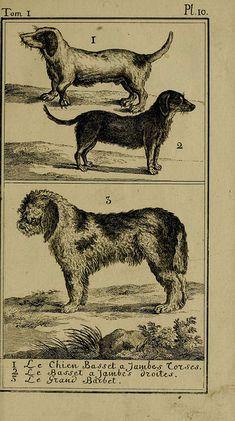"""""""Dogs"""" Histoire naturelle, générale et particulière, avec la description du Cabinet du roi. Tome I.  Paris,De l'Imprimerie royale,1750-1804.  biodiversitylibrary.org/page/25697141"""