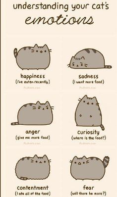Story of my cats.