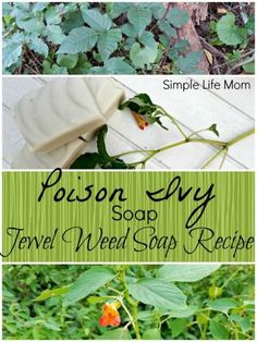 Poison Ivy Soap Recipe with Jewel Weed - a natural remedy for posion ivy, oak, and sumac. Helps stop it from spreading or breaking out in the first place.