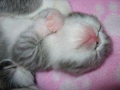 Now, I lay me down to sleep....
