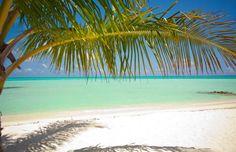 448 Tropisch Strand met Palmen 420 x 270  fotobehang &lijm