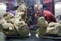 Titanosaur tail bones discovered in China.