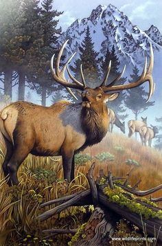 In this giclee print by Jerry Gadamus a massive elk bugles out a warning to all other males in the territory that this herd belongs to him. Comes with a certificate of authenticity