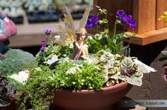 The Green Gardener: Fairy Gardens