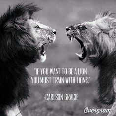 Train with the lions to be a lion