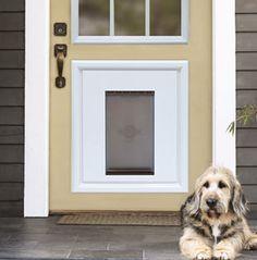Dor-inset doggy door