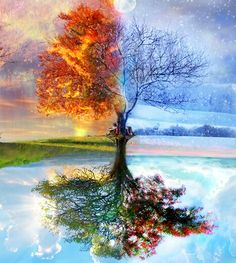 FIRE AND ICE TREE.